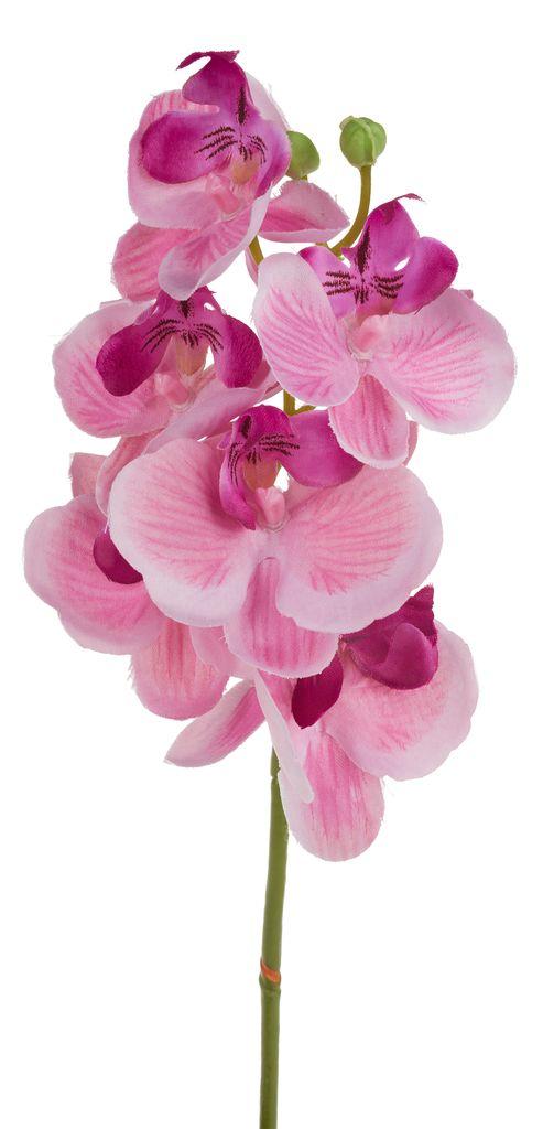 orchideen stiel  vbs hobby bastelshop